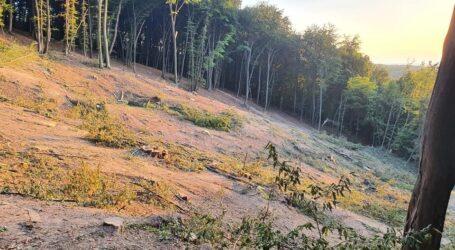 Pădure de pe Meseș, rasă de tăietorii de lemne