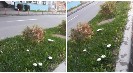 Pe Bulevardul din Zalău cresc bureți