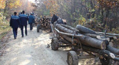 Trei clujeni, prinși că au furat 21 de arbori din pădurile Sălajului