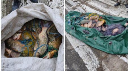 Zeci de kilograme de pește, confiscate de polițiștii din Cehu Silvaniei