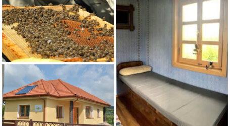 UNIC în România: pensiunea din Sălaj unde dormi în pat cu albinele