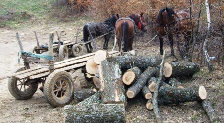 Polițiștii au prins un tânăr care a furat 3 arbori din pădurea satului Mirșid