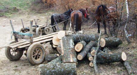 Hoți care au furat lemn din pădurea Sălajului, prinși de polițiști