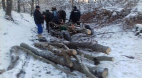 6 hoți de lemn, prinși de Jandarmeria Sălaj