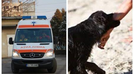 Duba de Jandarmerie, transformată în Ambulanță în cazul femeii mușcate de un câine în Zalău. Ambulanța NU avea autospeciale disponibile
