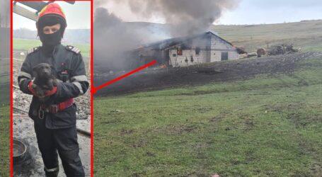 Pompierii zălăuani au salvat viața unui cățel surprins de flăcări într-un puternic incendiu la o clădire din comuna Crișeni