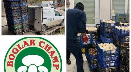Boglar Champ a DONAT 12 tone de ciuperci pentru prepararea a 24.000 de porții de mâncare pentru oamenii sărmani