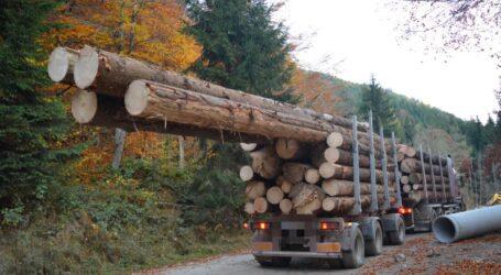 STATISTICĂ OFICIALĂ! Câte hectare de pădure se fură într-un an din județul Sălaj