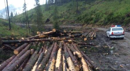 Cât lemn s-a furat anul acesta din pădurile Sălajului? Poliția a deschis 22 de dosare penale