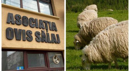 """Apelul DISPERAT al crescătorilor de oi din Sălaj: """"statul nu ne ajută cu nimic!"""". 90% din producția din Sălaj pleacă la arabi"""