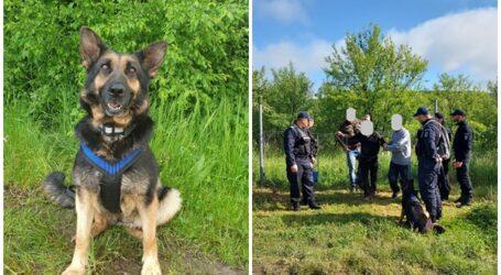 Un câine, EROUL zilei în Sălaj – a descoperit o persoană în vârstă de 78 de ani DISPĂRUTĂ