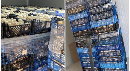 Boglar Champ a donat mai multe TONE de ciuperci pentru prepararea a numeroase porții de mâncare ce ajung la oamenii sărmani