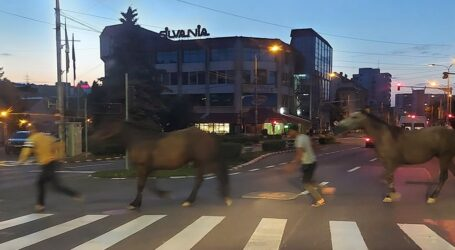 """VIRAL: doi cai, surprinși în centrul Zalăului în timp ce treceau regulamentar strada pe """"zebră"""""""