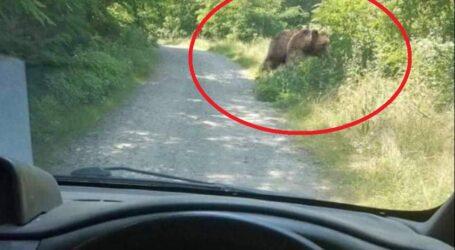 Mai mulți ciobani de pe Valea Someșului sunt DISPERAȚI! Urșii au atacat turmele de oi, ucigând zeci de miei
