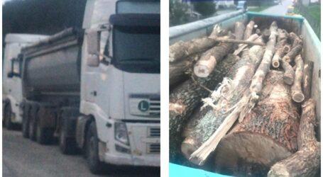 FOTO. 2 camioane pline cu lemne tăiate ILEGAL, oprite de polițiști în comuna Zimbor