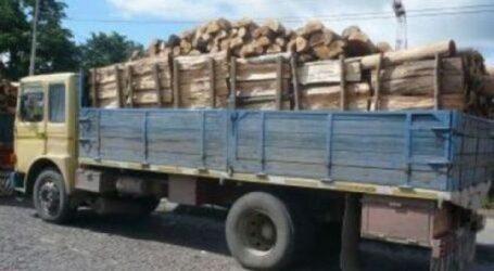 Polițiștii au prins un hoț de lemne în Cehu Silvaniei
